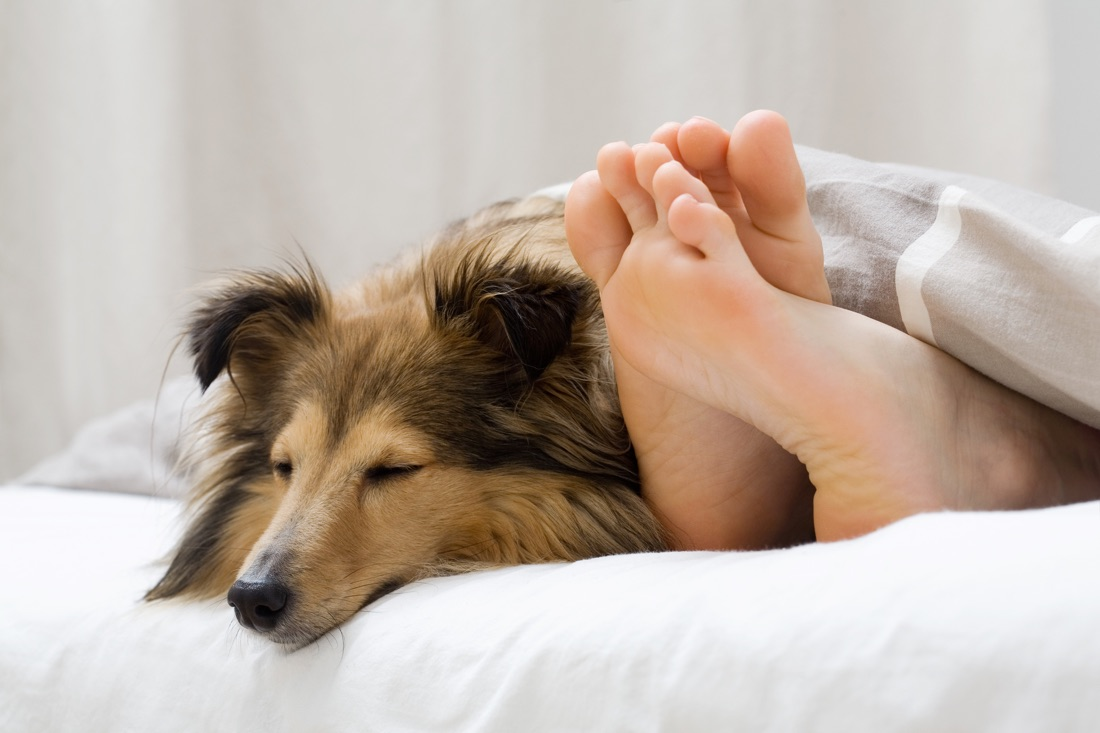 Smooth feet with dog
